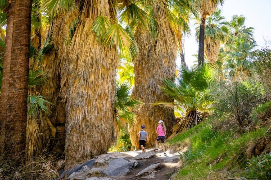 image of kids hiking one of the easy hikes near palm springs