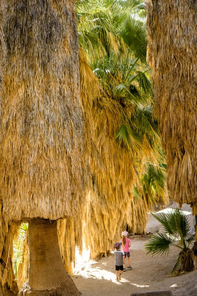 image of kids hiking in desert fan palms in Palm Canyon Palm Springs