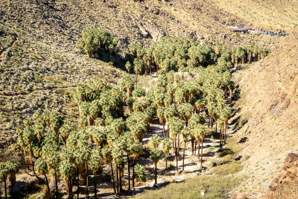 image of palm trees in palm canyon