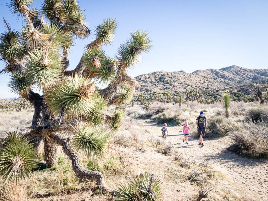 image of family hiking in Panorama Loop Trail in Joshua Tree National Park