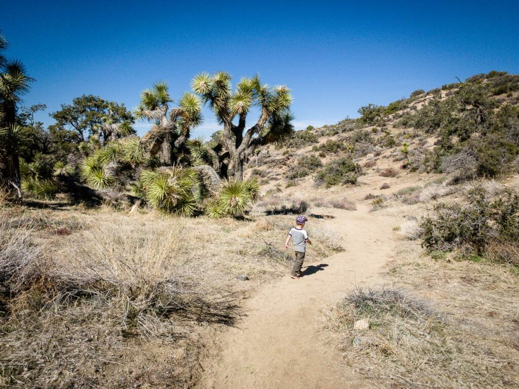image of boy hiking Panorama Loop Trail in Joshua Tree National Park