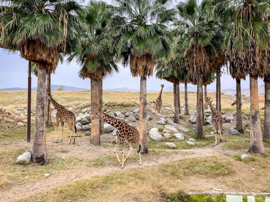 image of living desert zoo - kid friendly places in palm springs