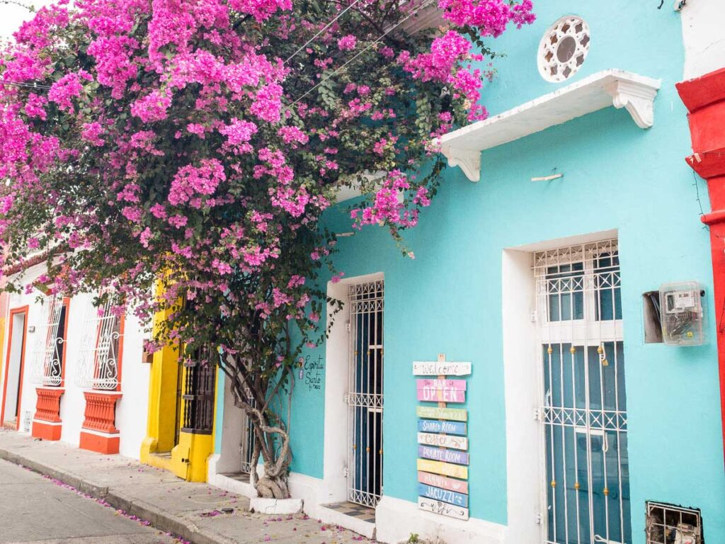 Bougainvillea vines growing on a brightly colored street in Getsemani, Cartagena