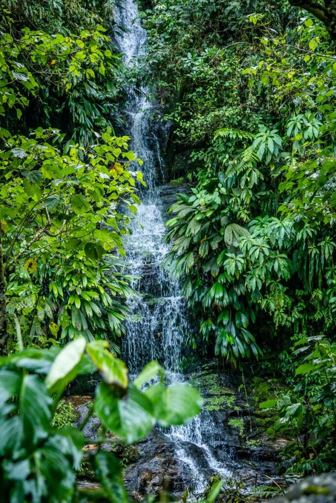 A waterfall in the jungle on the Lost City trek