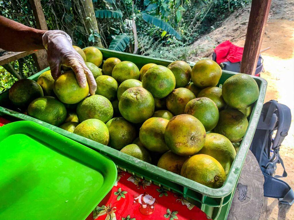 The fresh squeezed orange juice on the Ciudad Perdida trek is delicious