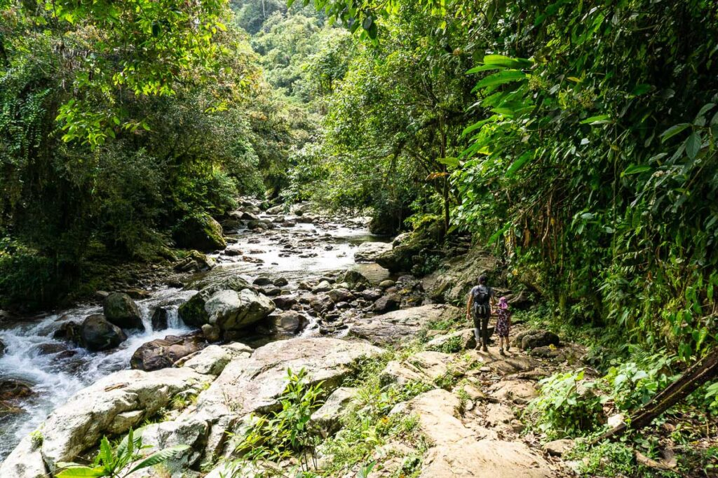 Hiking through the jungle along the river on the final leg to the Lost City Colombia