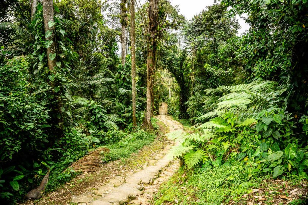 The Ciudad Perdida trail winds through the jungle in the Sierra Nevada mountains