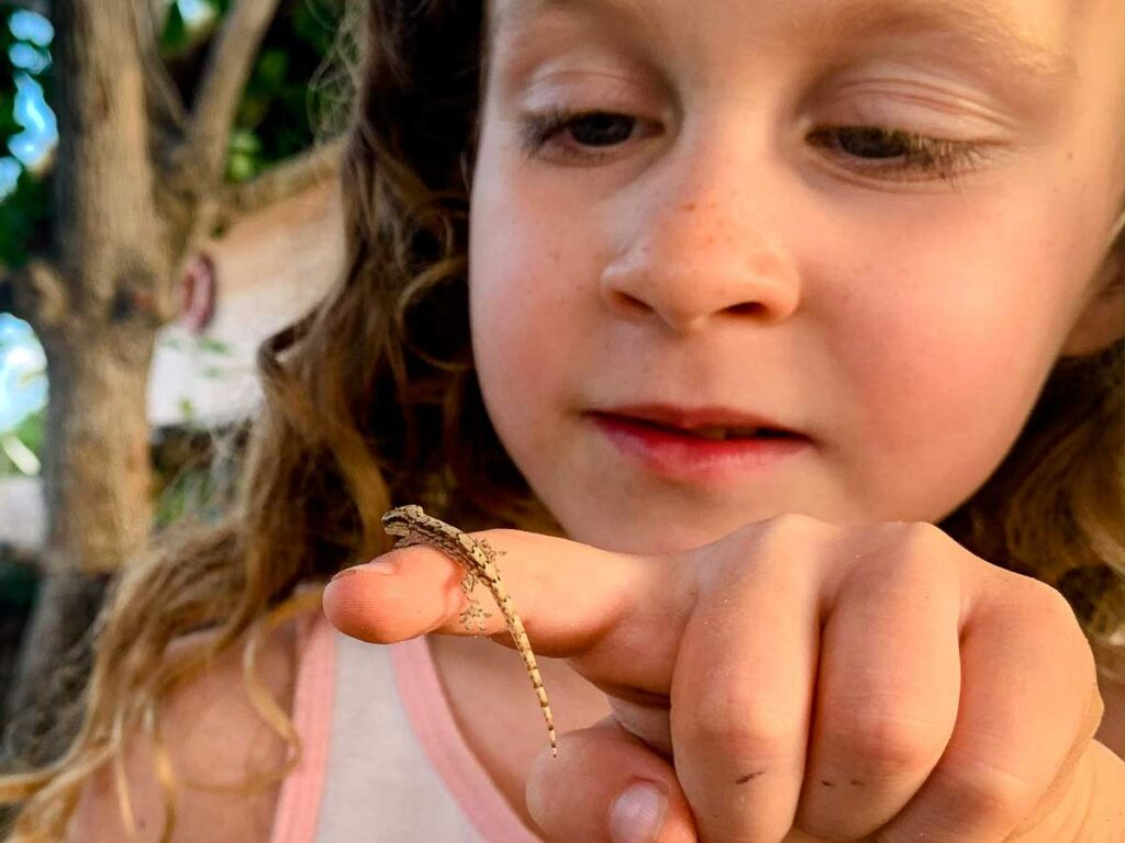 This tiny lizard loved climbing on our kids atthe Dahlandia resort, Isla Mucura, Colombia