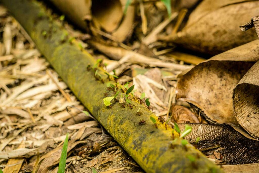 The kids could watch leaf-cutter ants forever