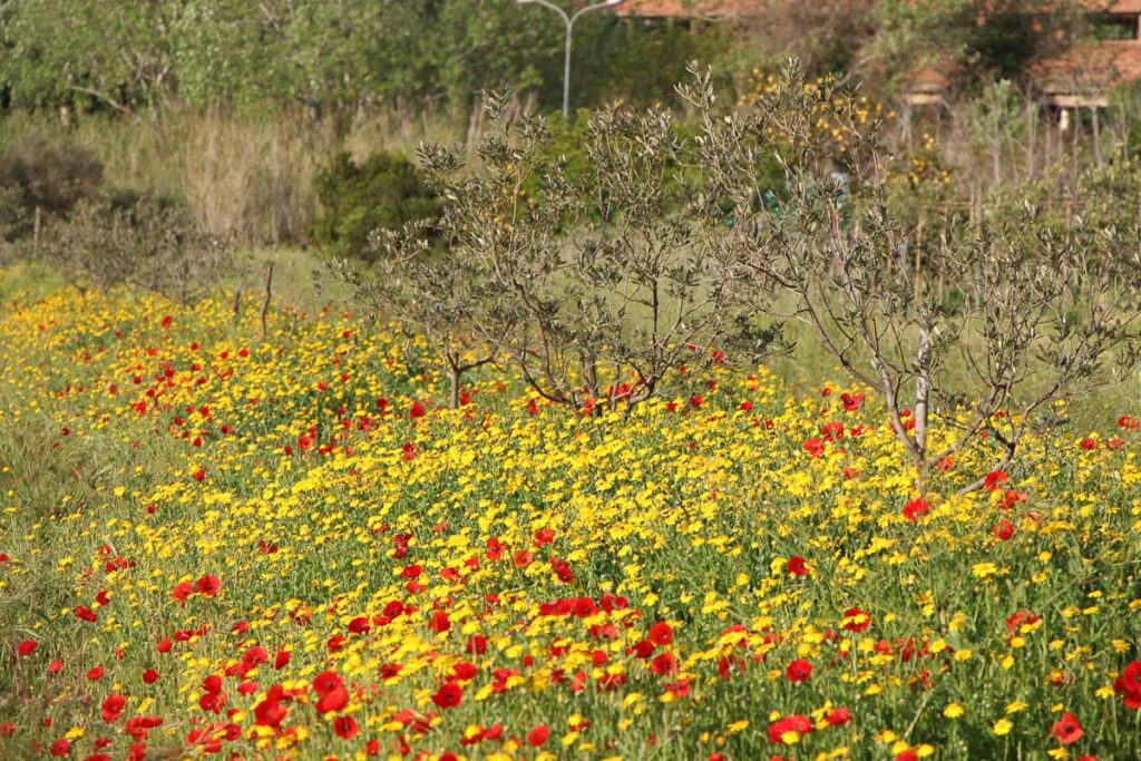 the beautiful countryside on Elba Island has thousands of wildflowers