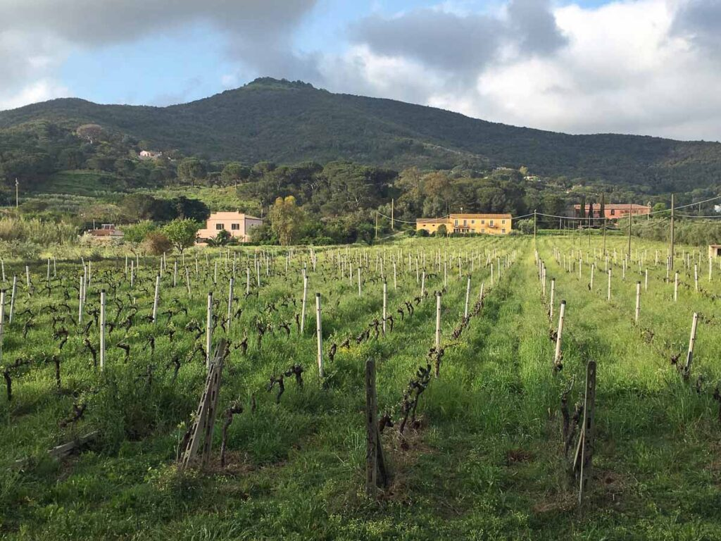 The beautiful countryside of Isola d'Elba, Italy