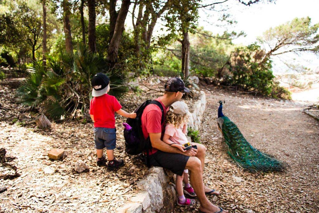 Lokrum Island with Kids - Dubrovnik things to do with kids