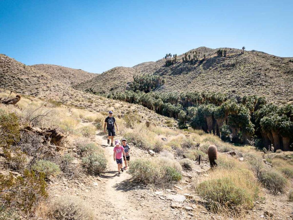 Indian Canyons has plenty of kid-friendly hiking near palm springs