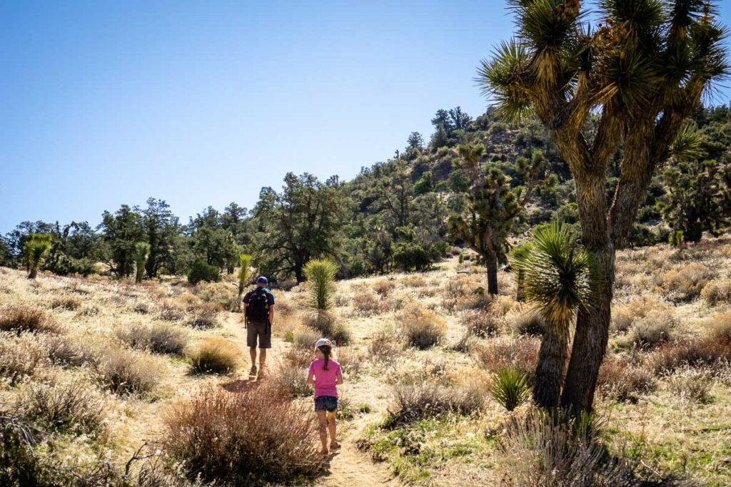 hiking Joshua Tree with kids