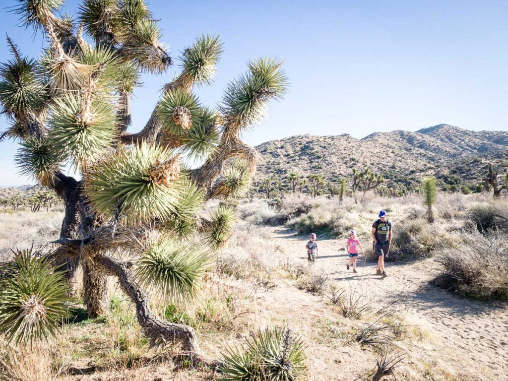 Top activities for kids in Joshua Tree National Park