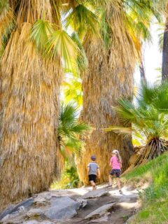 The shady kid-friendly Palm Canyon Trail is a great activity for a hot day in Palm Springs