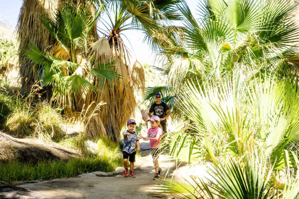 The palm canyon trail is a fun family activity in Palm Springs
