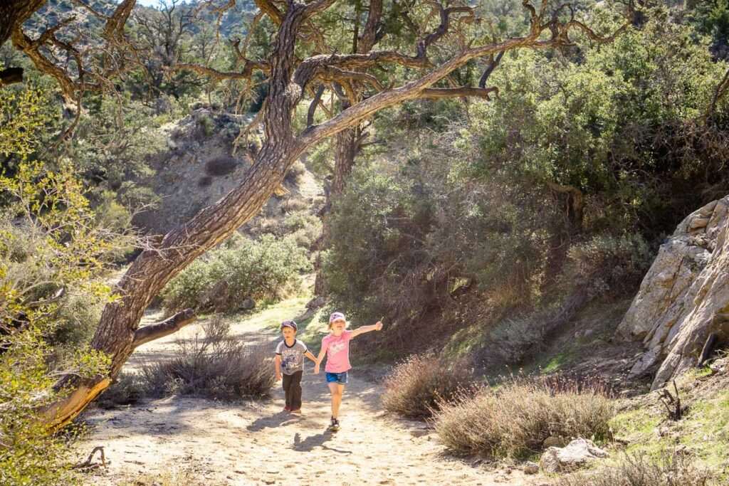 The second loop of the Panorama Loop trail is through a beautiful valley