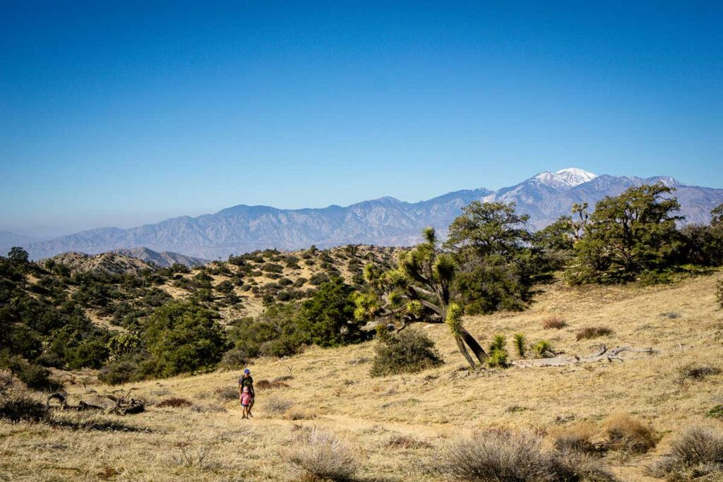 Enjoy amazing scenery while hiking the Panorama Loop Trail in Joshua Tree