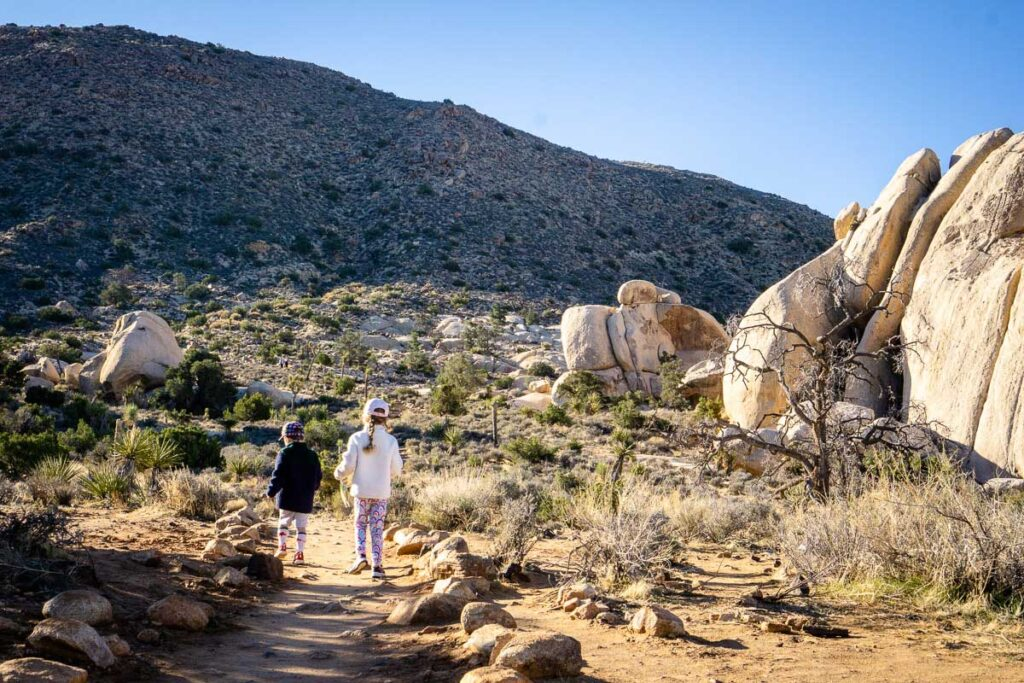 Ryan Mountain Trail was one of our favorite Joshua Tree kid friendly hikes