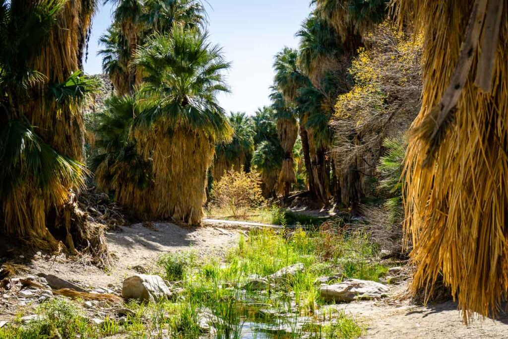 best hikes near Palm Springs - palm canyon hike