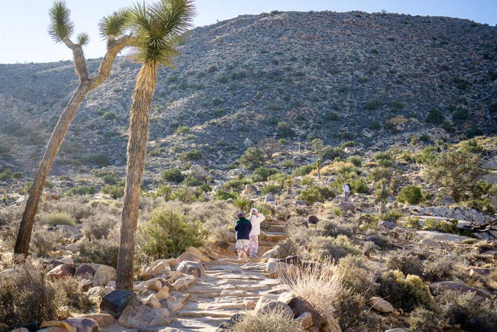 The Ryan Mountain trail appears on the official Joshua Tree map, but it's easy to follow without a map