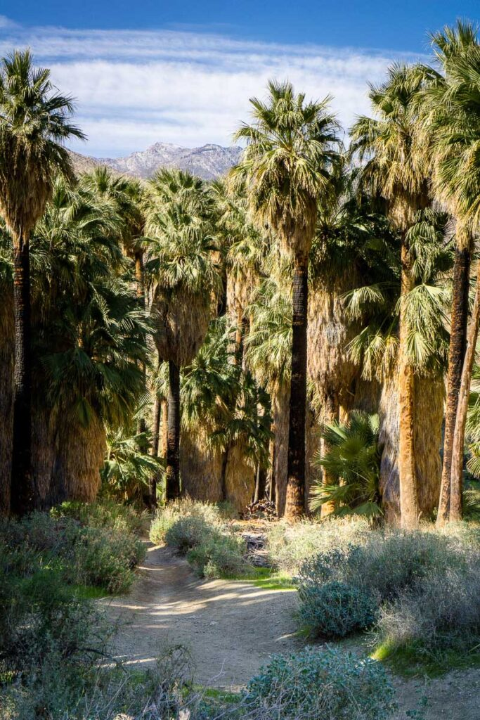 best hikes in palm springs for kids