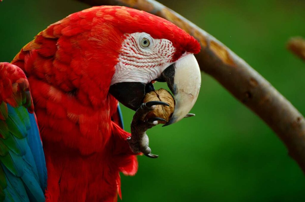Make time in your xcaret itinerary to see the parrots and other tropical birds at the Aviary