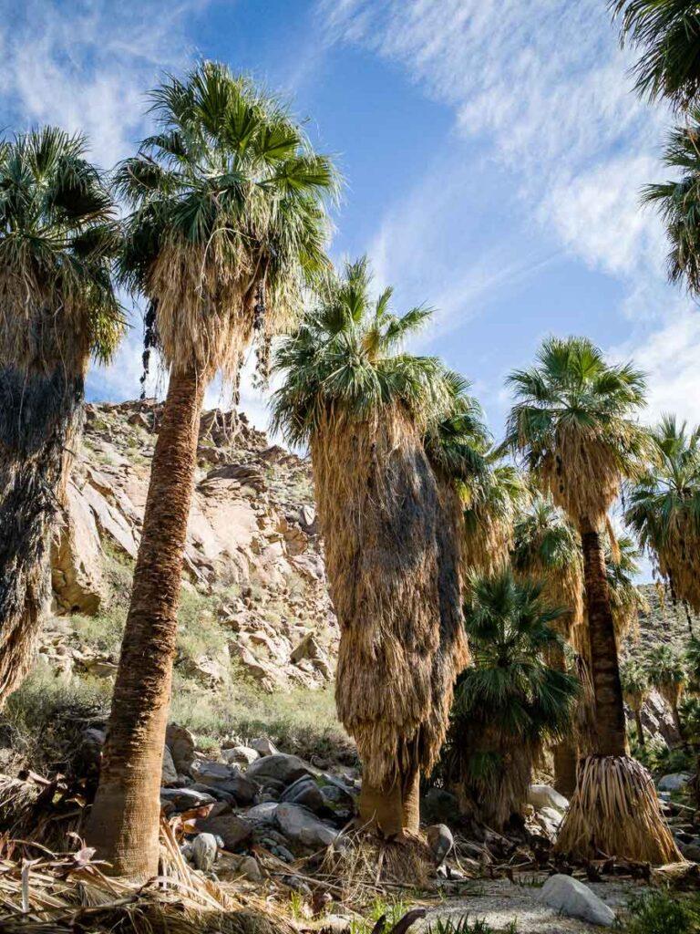 palm springs oasis hike