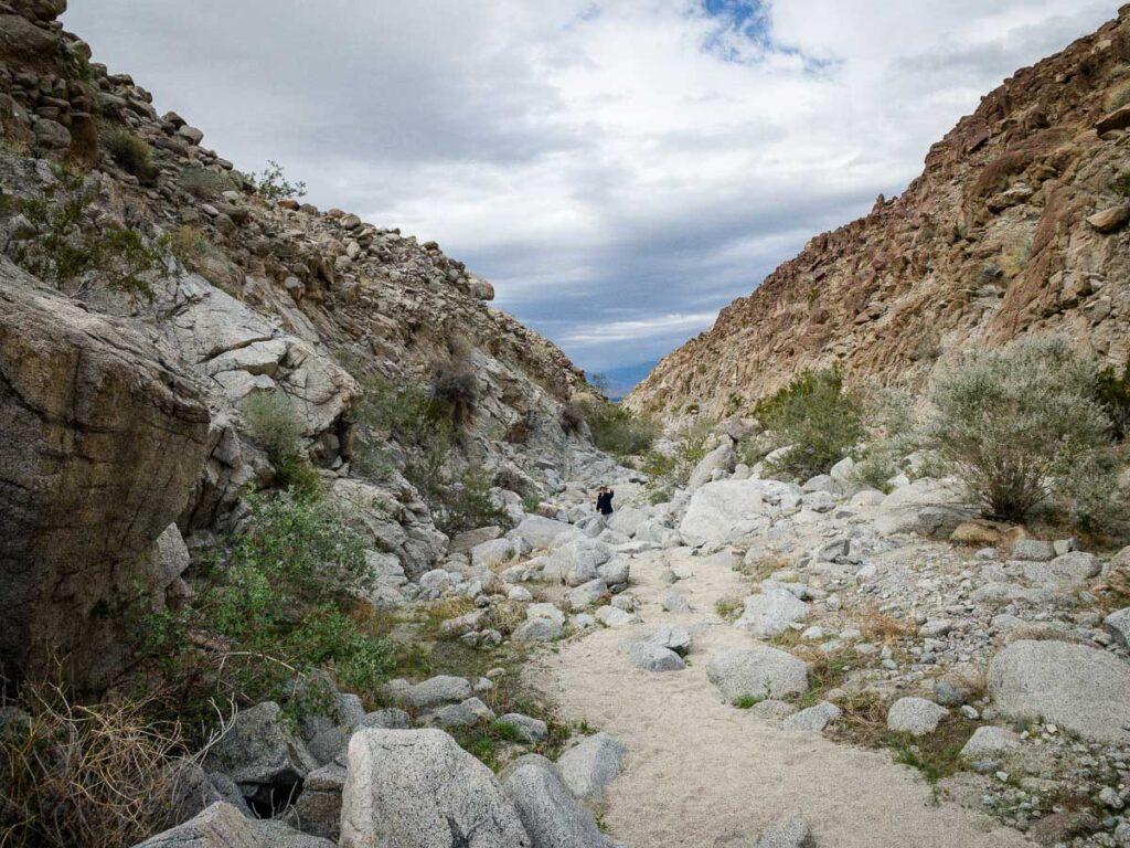 A boy enjoys the boulders on the Wilderness Loop Living Desert hike