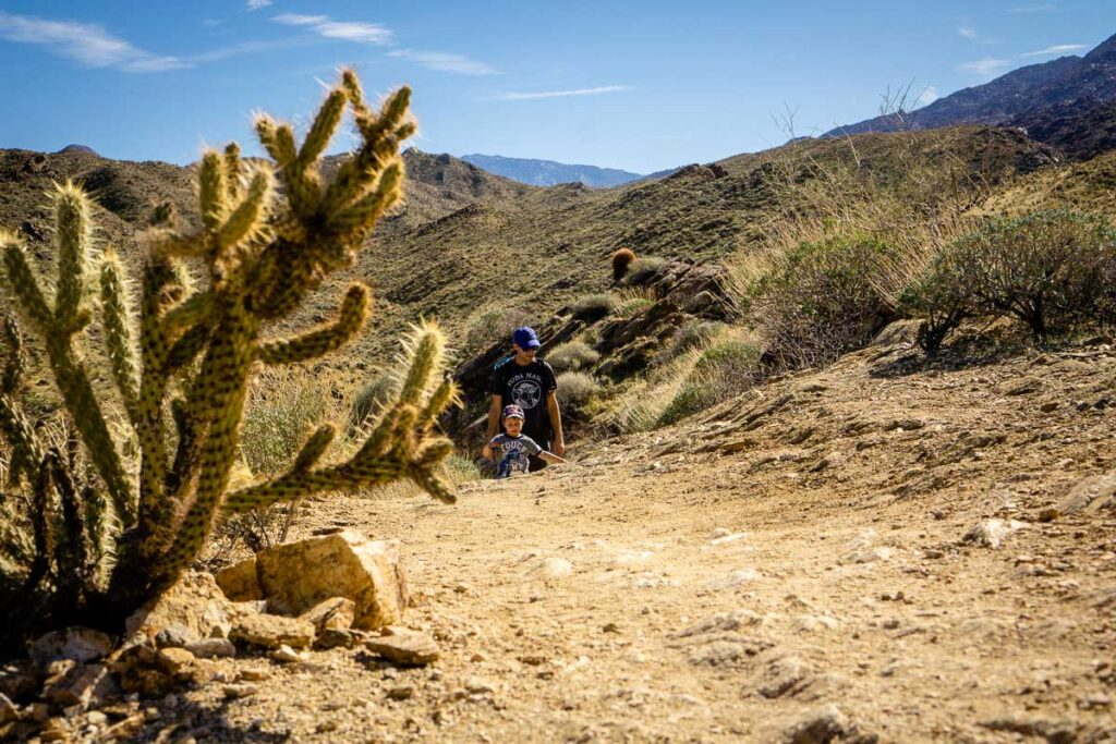 The Palm Canyon Trail to Victor Trail loop is one of the best hikes in Palm Springs