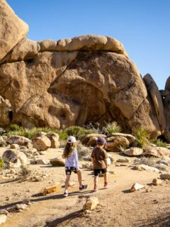 Many of the best hikes in Joshua Tree are easy and kid-friendly