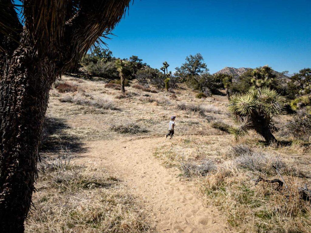 hikes near black rock campground - Panorama Loop trail