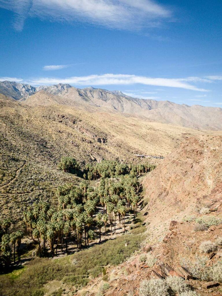 The Palm Canyon Trail is palm springs oasis hike