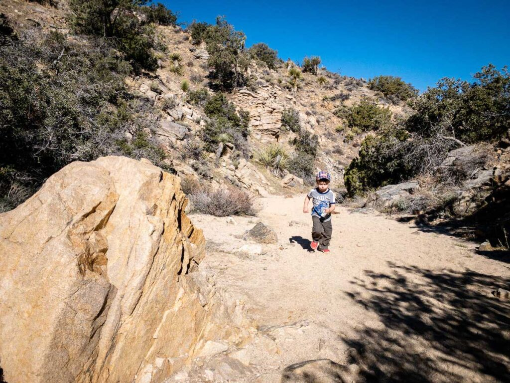Our kids (aged 4 & 6) easily hiked the Panorama Trail in Joshua Tree, California