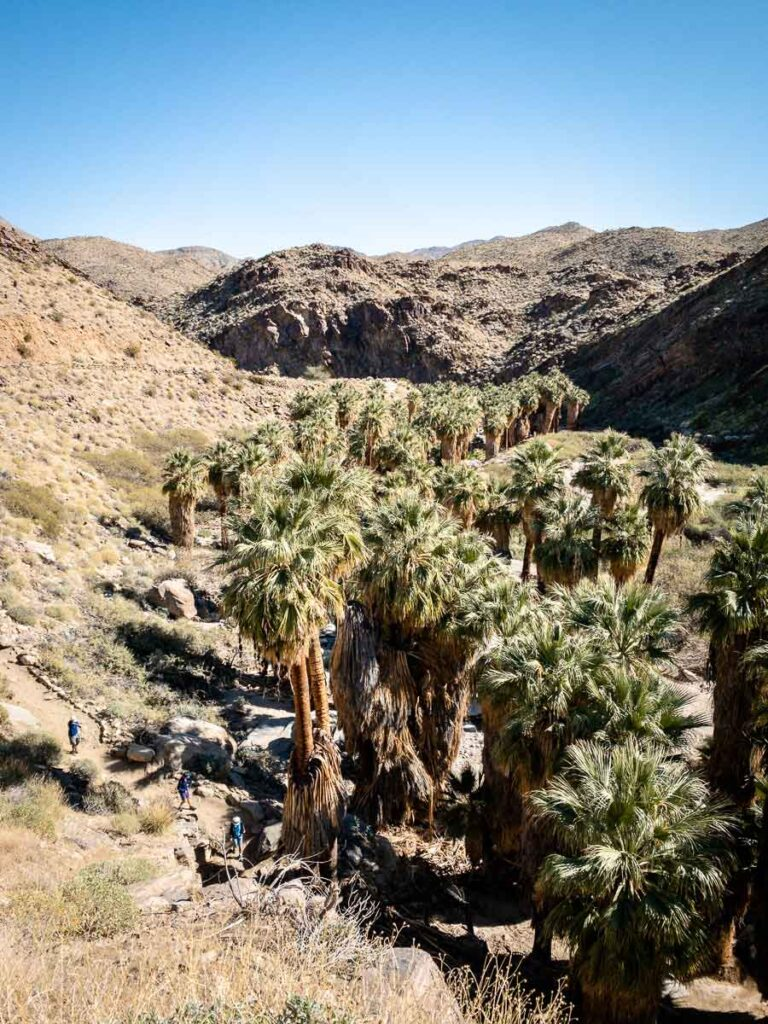 short palm springs hiking trails for kids