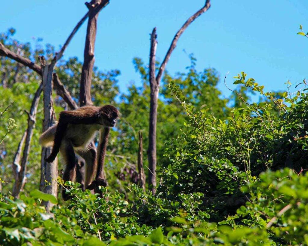 Aktun Chen eco park features local wildlife, such as monkeys