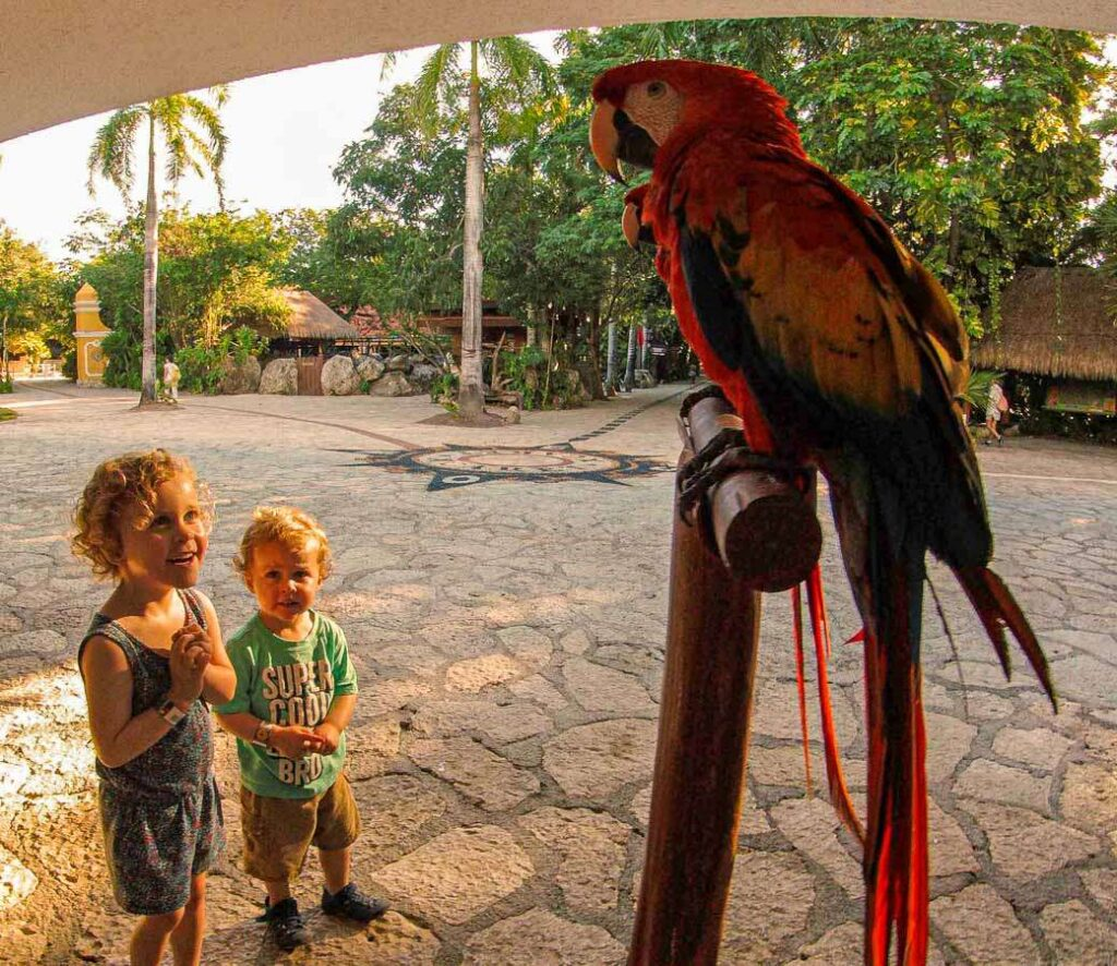 The colorful birds at Xcaret