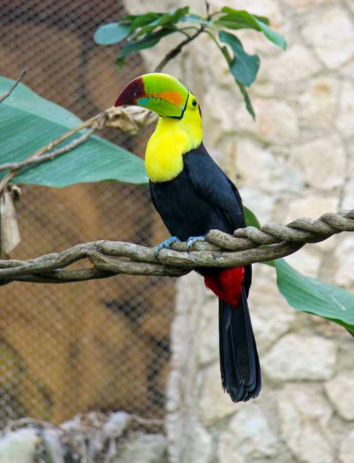 The colorful birds in the aviary was a highlight of our day at xcaret with kids
