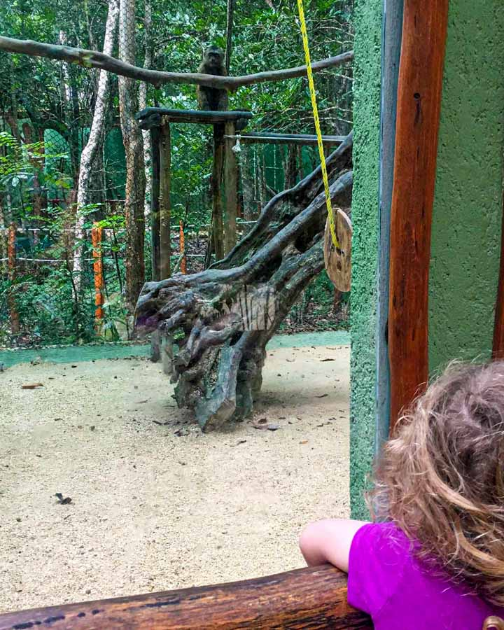 Kids will love watching the monkeys at this Mexico eco park near Playa del Carmen