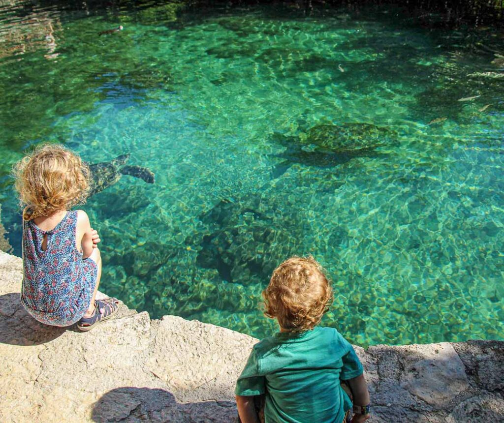 Watching the Xcaret turtles was our kids favorite thing to do at the ecopark
