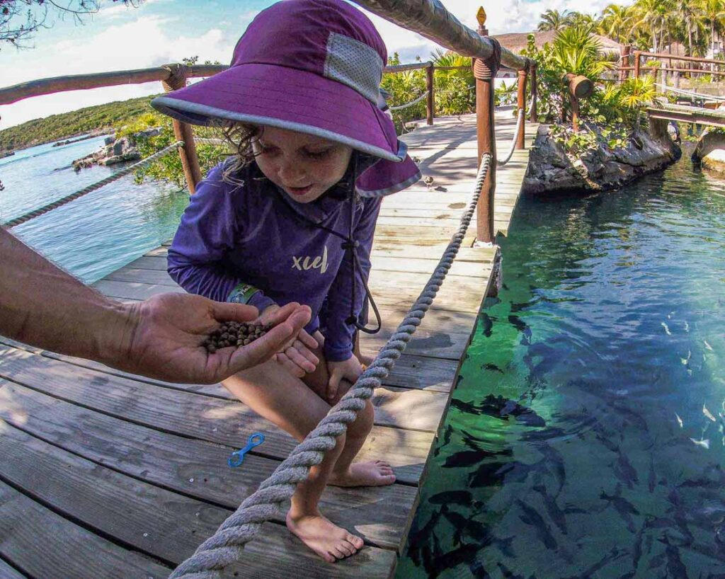 If you'd like to see lots of fish at Xel-Ha with kids, try throwing fish food over the bridges