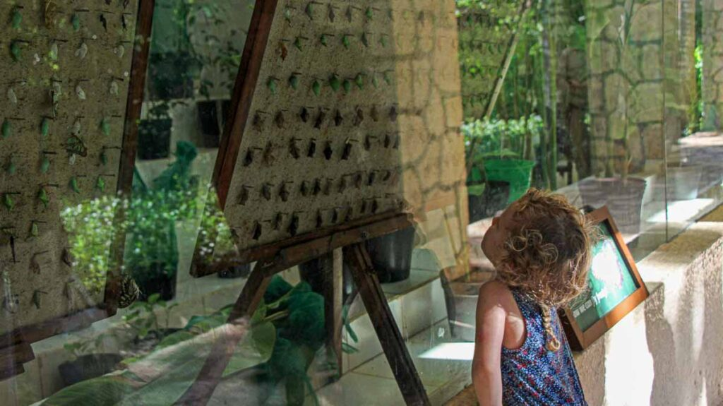 Kids will love seeing the stages of butterfly transformation at the Xcaret butterfly exhibit