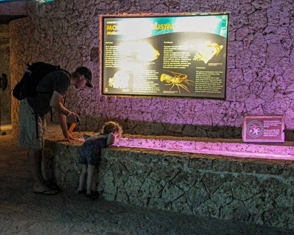 When visiting Xcaret with kids, swing by the aquarium to touch the starfish