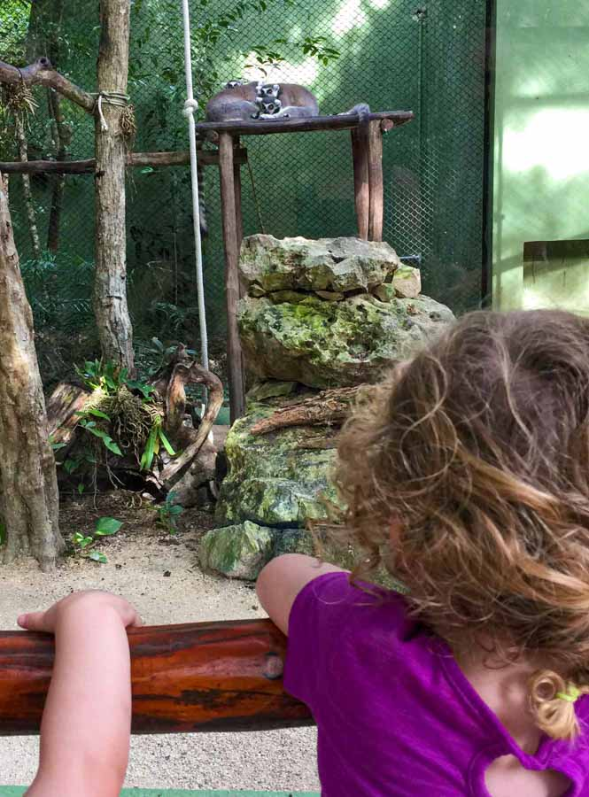 The ecopark Akumal Monkey Sanctuary is a kid-friendly attraction near Playa del Carmen, Mexico