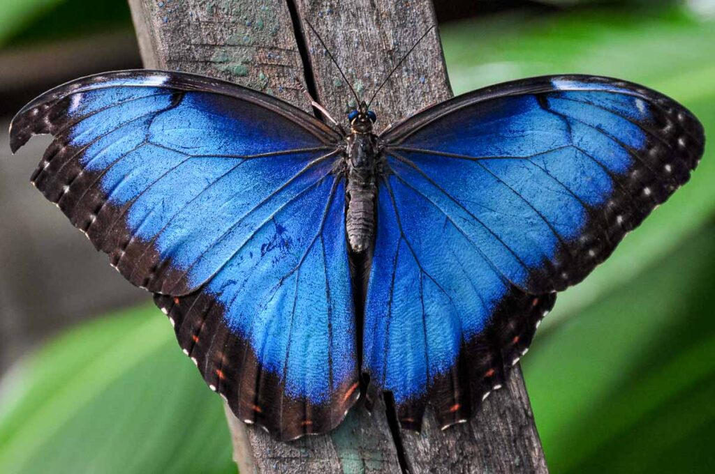 A chance to see butterflies up close is another fun thing to do at Xcaret Park with kids