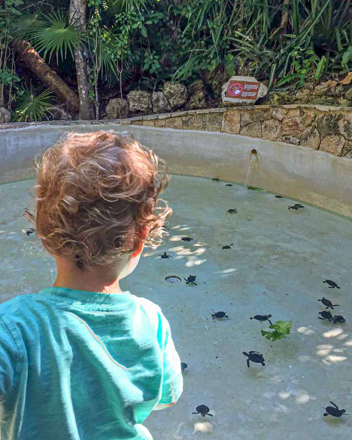 When visiting Xcaret with kids, don't miss the baby sea turtles