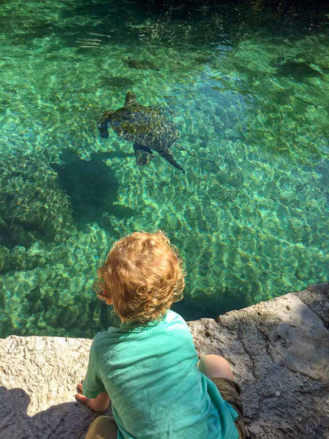 Our kids favorite thing to do at Xcaret was watching the sea turtles