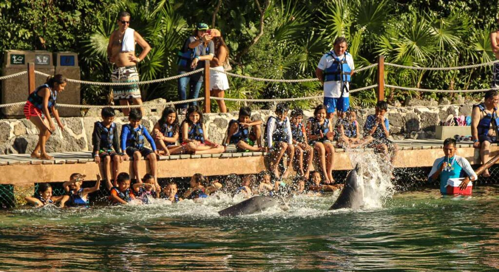 You can swim with dolphins at the Xel-Ha Eco water park near Tulum, Mexico