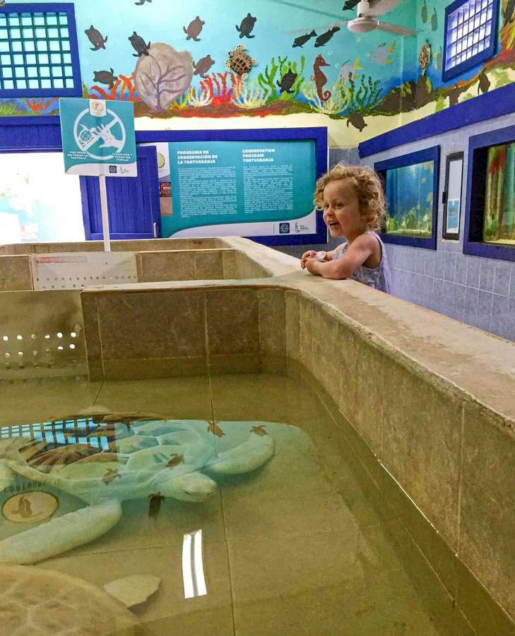 Kids love the Isla Mujeres turtles
